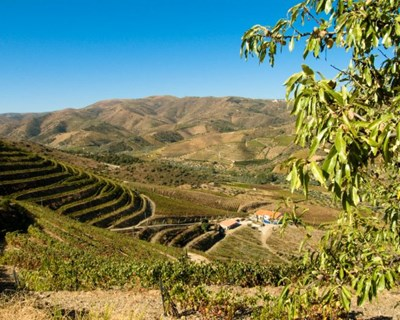 """Meetings from Douro - Magellan World"": o projeto que aposta no agroalimentar e turismo"