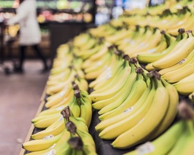 União Europeia é o principal destino das bananas do Equador