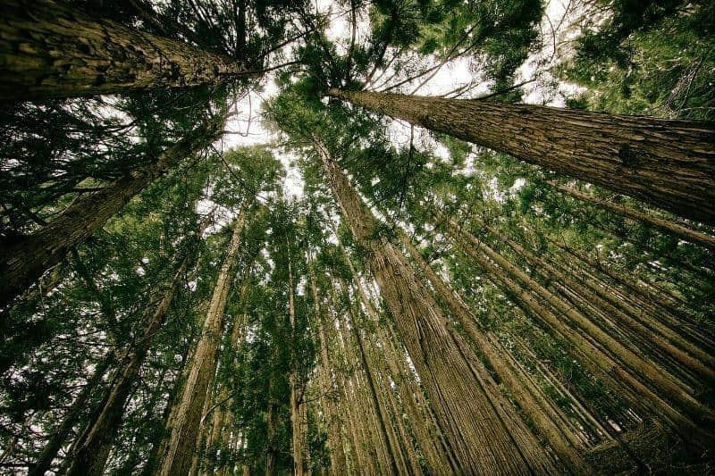 Resultado de imagem para floresta sustentavel