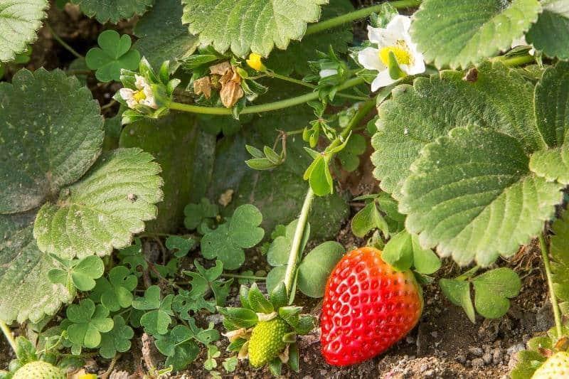 agricultura biologica